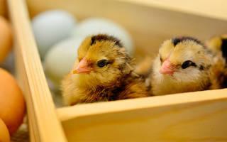 Какой выбрать инкубатор для яиц характеристика лучших
