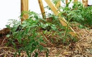 Мульчирование томатов в теплице как получить большой урожай помидоров