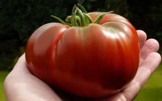Томат салатный шапка мономаха фото описание и урожайность