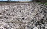 В крыму почвы теряют плодородие через засоления