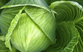 Надо ли обрывать листья у капусты?