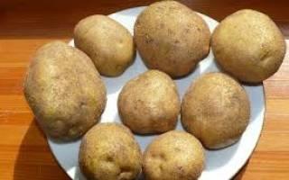 Особенности выращивания и характеристики сорта картофеля венета