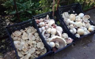 Фото и описание грибов крыма