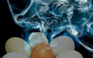 Как проводить дезинфекцию инкубатора перед закладкой яиц