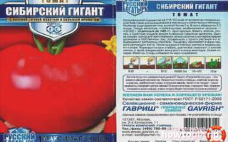 Все самое важное о сорте помидоров сибирский гигант