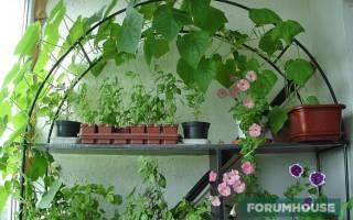 Как посадить и вырастить огурцы берендей