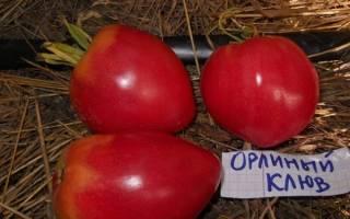 Описание сорта томата орлиный клюв