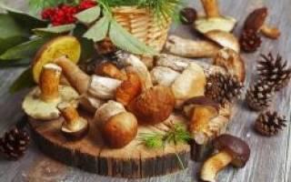 Какие грибы растут в ростовской области где можно собирать