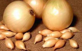Как посадить и вырастить лук купидо