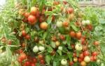 Как вырастить баклажаны сорта валентина f1 на даче