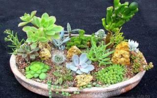 Описание и фото популярных растений суккулентов для домашних условий