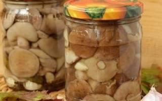 Вкусные маринованные маслята на зиму рецепты приготовления