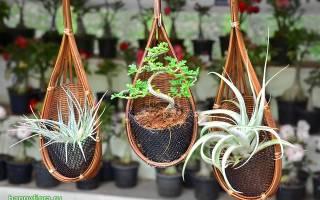 Подборка 15 самых красивых комнатных растений для вашего дома