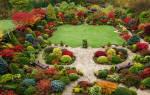 Какие растения называют декоративными названия популярных представителей