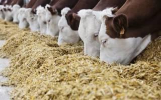 Комбикорм состав смеси для домашних животных