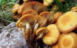Какие грибы растут в саратовской области