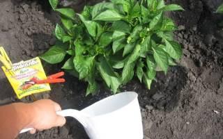 Чем подкормить перец после высадки в открытый грунт