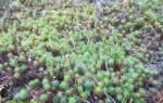 Виды мхов в лесах  какими они бывают