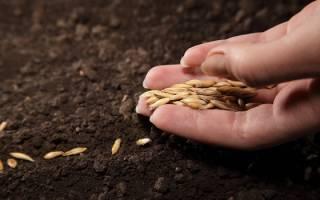 Использование ручных сеялок в домашнем земледелии