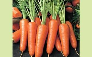 Морковь на севере лучшие сорта и их описания