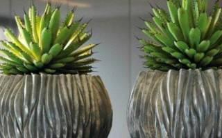 Агава особенности выращивания комнатного растения