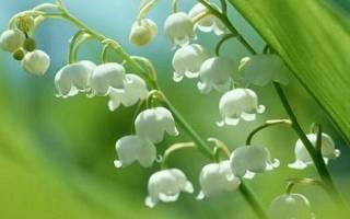 Опасные ядовитые растения о которых вы не знали