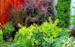 Питомники плодовых деревьев в подмосковье