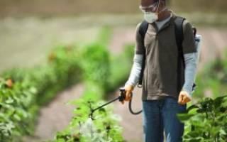Основные модели и правила выбора садовых опрыскивателей