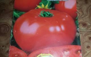 Высокоурожайный и скороспелый томат звезда сибири