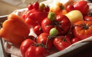 Когда нужно подкармливать рассаду помидоров и как это делать