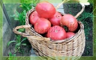 Реальные гиганты помидоры сорта розовый гигант