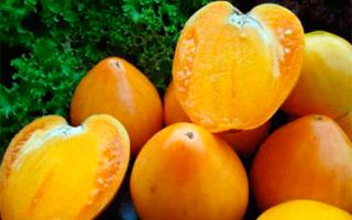 Урожайный и крупноплодный сорт томатов медовый спас