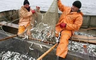 В украине резко уменьшился вылов рыбы