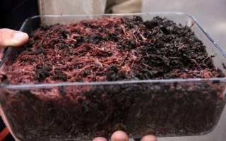 Биогумус своими руками производство в домашних условиях