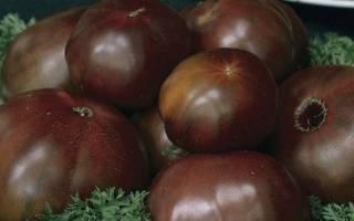 Как вырастить черный принц посадка и уход за черными томатами