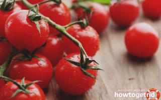 Для теплиц и открытого грунта томат мадейра