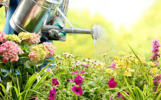 Что будет если подкармливать растения сывороткой?