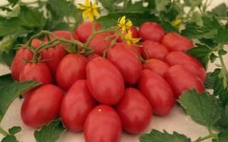 Сорт помидоров ракета характеристика достоинства и недостатки