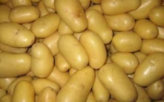 Картофель скарб характеристика агротехника выращивания