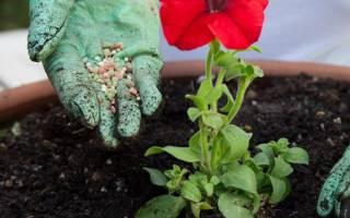 Удобрение и подкормка растений