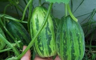 Огурдыня особенности выращивания гибрида огурца и дыни