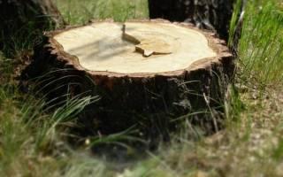 Выкорчевывание пней на даче как легко избавиться от остатков дерева