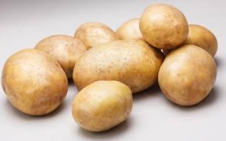 Сорт картофеля ривьера характерестика агротехника выращивания