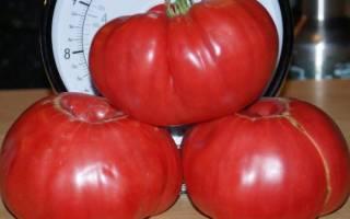 Сорт помидор сахарный пудовичок характеристика плюсы и минусы