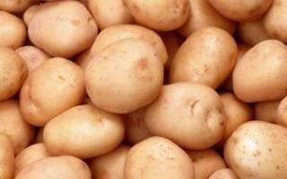 Вкус и урожай сорт картофеля жуковский ранний