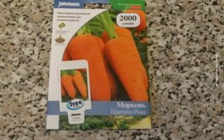 Знакомимся с сортами моркови для подмосковья