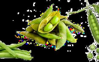 Что относится к бобовым культурам