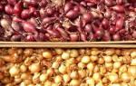 Выбираем лучшие сорта лука севка