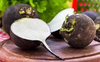 Белая редька калорийность витаминный состав чем полезна кому нельзя есть