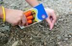 Как правильно сеять морковь чтобы она быстро взошла